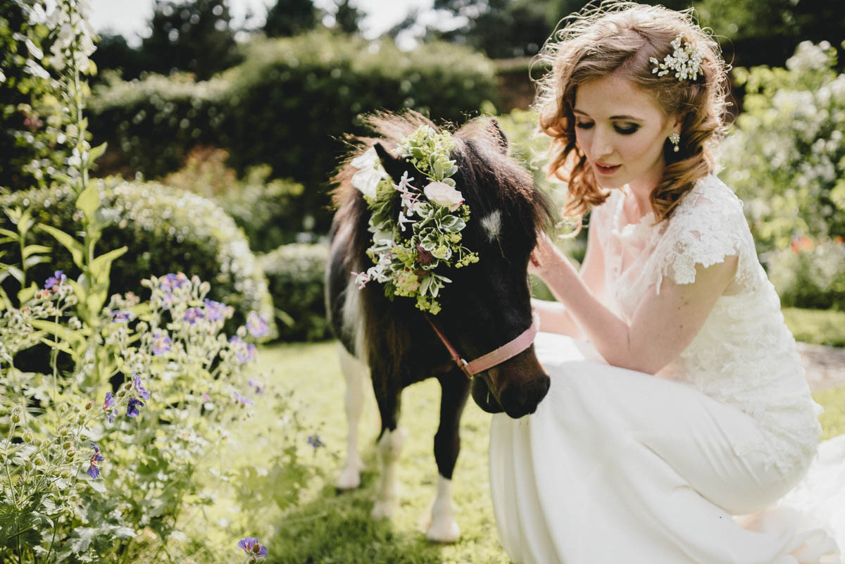 shetland ponies at wedding